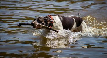 Mieszkańcy Złotowa chcą kąpieliska dla czworonogów