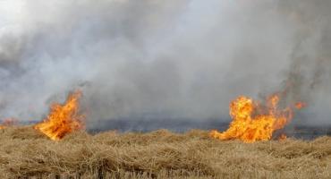 Pożar zboża w Drożyskach Wielkich