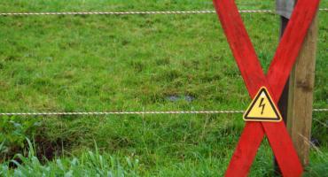 Z czego składa się pastuch elektryczny? Budowa ogrodzenia elektrycznego