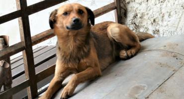 W Lipce znaleziono psa
