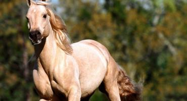 ABC pomocy dla konia
