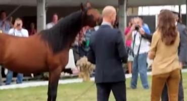 O zmianach w stadninach koni arabskich