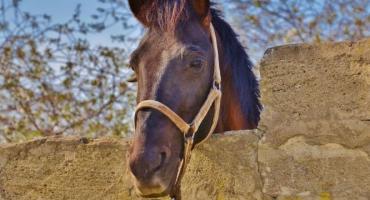 Narodowe Centrum Jeździectwa: Biały Bór odzyska splendor