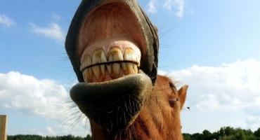 Problemy stomatologiczne u koni