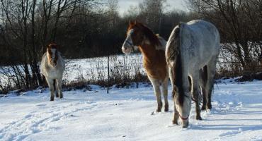 Zdecydowana większość końskich chorób wynika z trzymania ich w zamkniuęciu!!