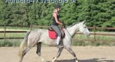 oznaki rozluźnienia psycicznego i fizycznego u konia