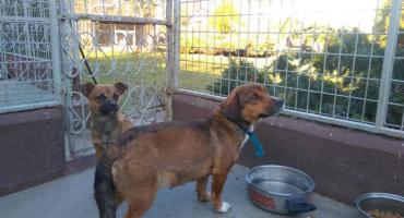 Dwa psy przywiązane przy autostradzie