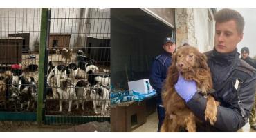 Ratują ponad 300. psów z nielegalnej hodowli