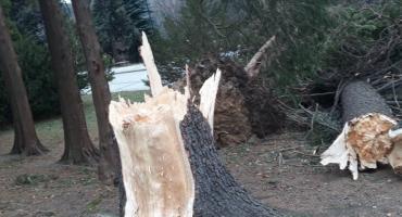 Nad Świeradowem przeszła wichura. Są duże zniszczenia