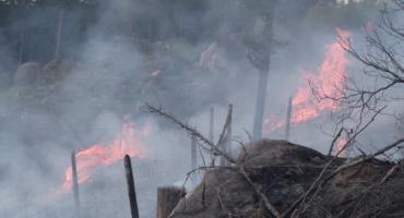 Pożar lasu w okolicy Osiedla Łomnickiego