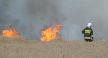 Ogromny pożar w okolicach Maciejowej