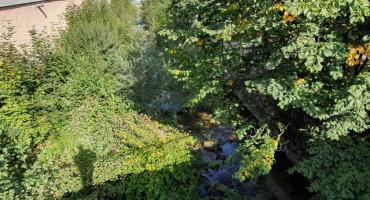 Rzeka w Podgórzynie zarasta