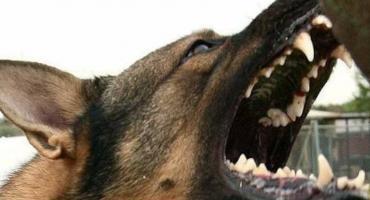 Psy zagryzły człowieka ?