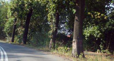 Wytną 155 drzew