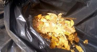 Ponad 1,5 tony nielegalnego tytoniu