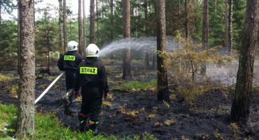 Pożar w głębi lasu (foto)