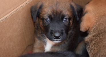 Sześć szczeniaków porzuconych koło Wodospadu Szklarki znalazło nowych właścicieli