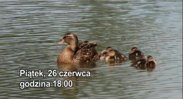 Zielony Rozwój - Ścieżka dydaktyczna w Gogołowicach
