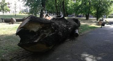 Dlaczego ścięte drzewo leży nie usunięte od roku? Ciekawa odpowiedź