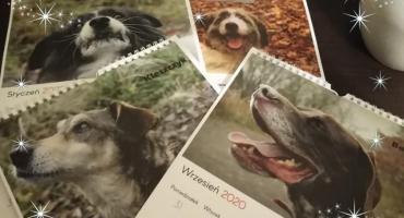Kup kalendarz na 2020 rok i wspomóż zwierzęta z legnickiego schroniska
