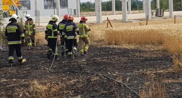 Strażacy ugasili kolejny pożar zbóż- tym razem w Kaliszu
