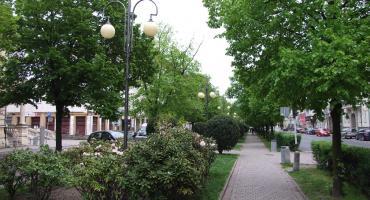 Miasto sadzi drzewa
