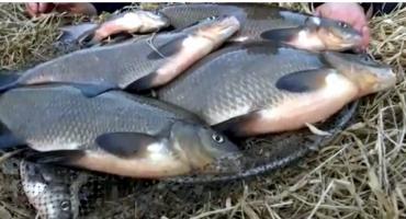 Może na ryby?  Jak odnaleźć trasy żerowania leszczy?