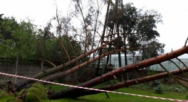 Powalone  drzewa,  uszkodzone  budynki i pozrywane dachy