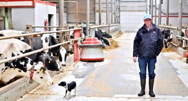 To jedna z największych obór w kraju. Tak Holender produkuje mleko pod Bukowcem
