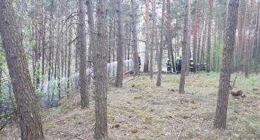 Bedlenki - kolejny pożar lasu, do akcji ruszyło 12 jednostek