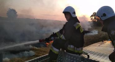Pożarów ciąg dalszy. Strażacy mają ręce pełne roboty [ZDJĘCIA]