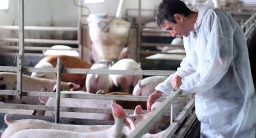 Uwaga rolnicy! Obszar powiatu przasnyskiego objęty strefą ASF