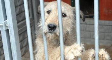 Świąteczna paka dla animalpsiaka - włącz się do akcji i pomóż zwierzakom ze schroniska w Kościerzynie