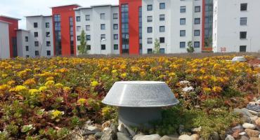 Trawnik na dachu – czym jest zielony dach?