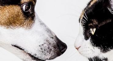 Cztery łapy- czyli rzecz o kotach i psach. Spotkania z baśnią.