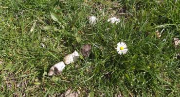 Wiosna na naszych podwórkach.