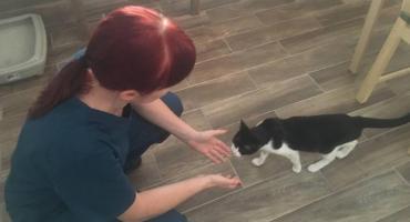 Na Grójeckiej koty czekają na adopcję