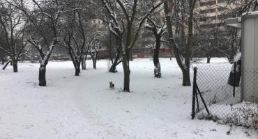 Teren  za bazarkiem przy ul. Mołdawskiej ma być sprzątany