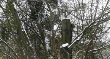 Park Opaczewski – urzędnicy uspokajają