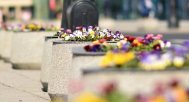 Kwiaty przy placu Zawiszy i Pomniku Lotnika