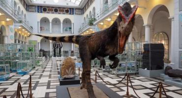 Krwiożerczy polski dinozaur Dyzio budzi dreszcz emocji na ul. Rakowieckiej 4