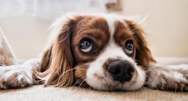 Masz psa? Myślisz, że wiesz o nim wszystko? Nie bądź taki pewny. Uzmysłowi Ci to specjalista