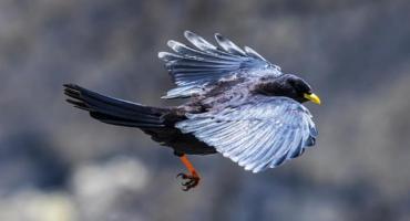 Kto truje ptaki na Mokotowie? Padło ponad 200 sztuk. Ostatnio na ulicach Jadźwingów i Bartłomieja
