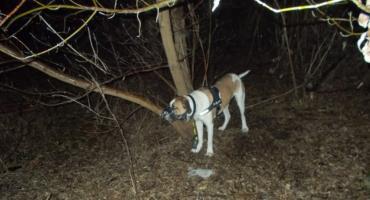 Zostawił psa przywiązanego do drzewa