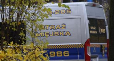 Nieprawidłowe parkowanie na czele listy - Straż Miejska podsumowuje listopad
