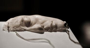 Wystawa PIĘKNO - Magdaleny Karłowicz w Łaźni