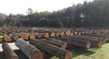 Lasy Państwowe sprzedają drewno