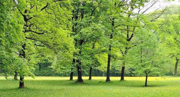 Osiedle Skorosze chce mieć swój park całodobowy, żeby uciec przed smogiem po zdrowie