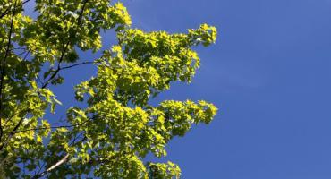 Sadzimy drzewa w ten weekend przy ul. Gierdziejewskiego w rejonie ul. Czerwonej Drogi