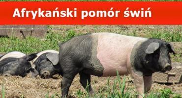 """Uwaga na na """"dziki padłe"""" w powiecie pruszkowskim - (ASF) afrykański pomór świń"""